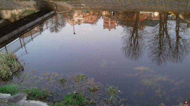У двох районах Прикарпаття виявили бактеріальне забруднення води